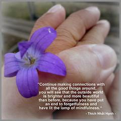 Visualizing mindfulness (366/194 July 12, 2012)