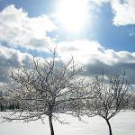 Today's Dance: Snow Days