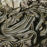 Home Life: Snakes! Snakes on the Doorstep!