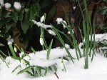 Today's Dance: Imbolc, The Promise of Spring