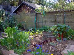 Backyard Vegetable Garden Planning